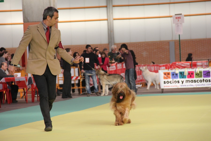 Madrid 2013 Best of Breed