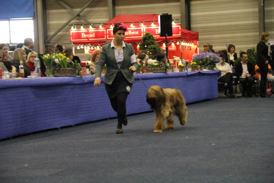Friburgo CH - Best of Breed