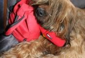 Il guardiano migliore per la mia borsa!