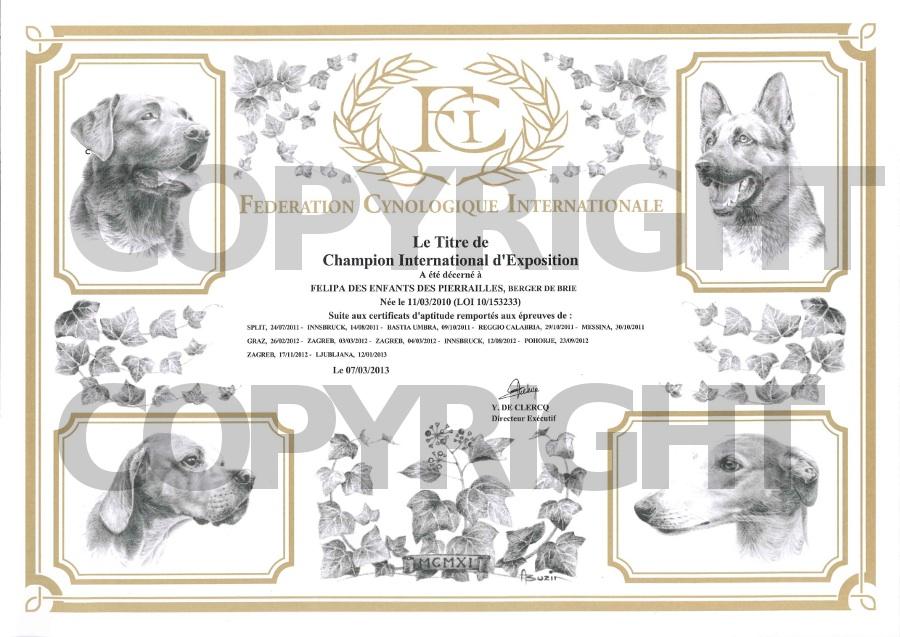 felipa-diploma-campione-internazionale_copyright